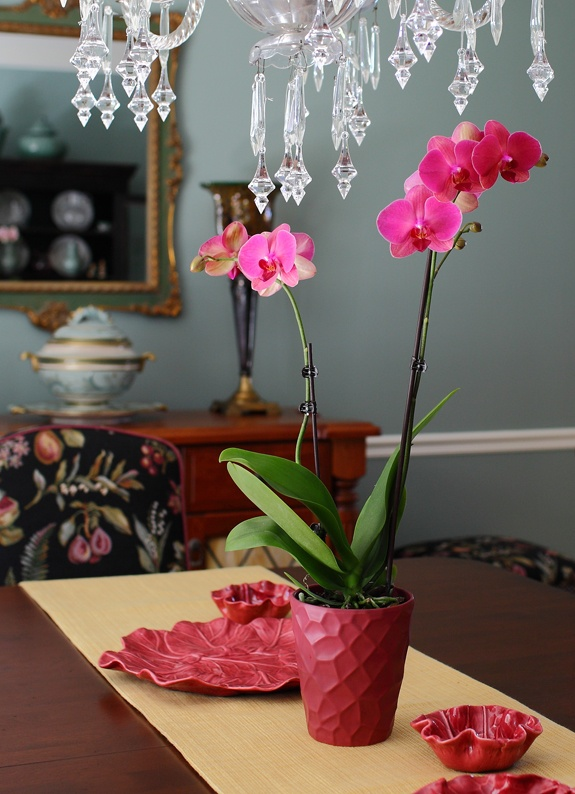 Dark Pink Orchid In Dining Room Orchids Etc Pinterest