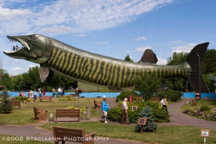 Giant muskie hayward wi up north pinterest for Muskie fishing wisconsin