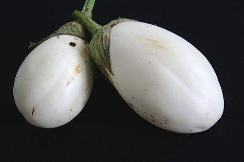 Eggplants Recipe | mustard seeds pinch of fenugreek / methi seeds ...