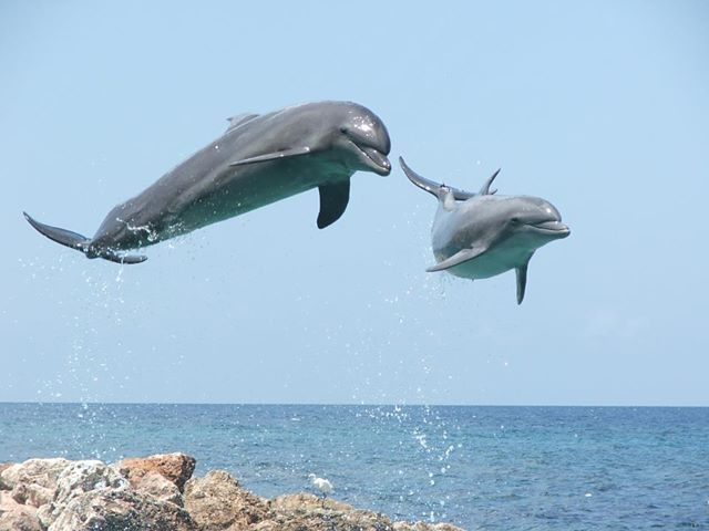 Y Flying Dolphins flying dolphins...