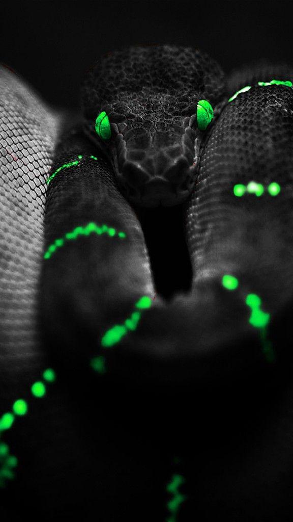 Snake Skin Wallpaper For Iphone Animal Wildlife
