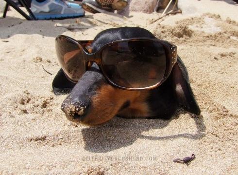funny-dog-on-beach-sunglases