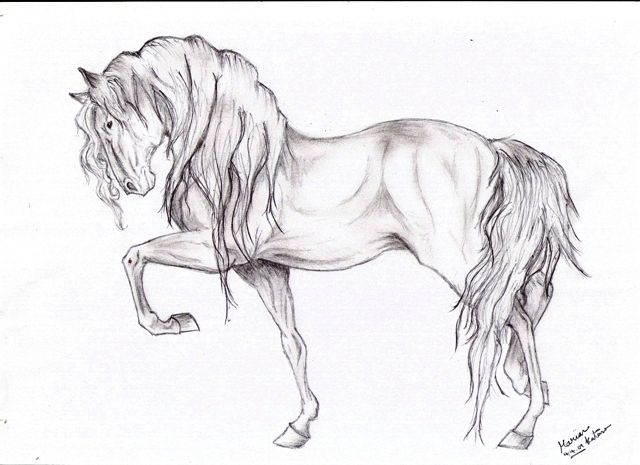 Horse drawings in pencil for kids