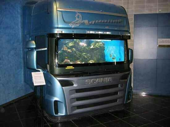 Man Cave Show Tank : Pinterest discover and save creative ideas