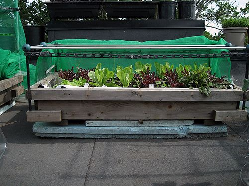 Rooftop hydroponic bed recycled concrete landscape for Hydroponic grow bed