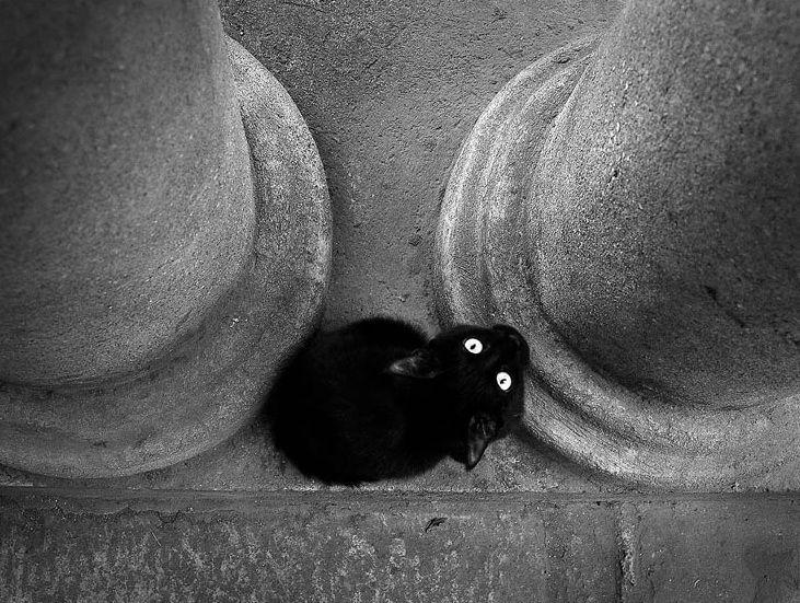 Black Cherry by Andrei Sliva