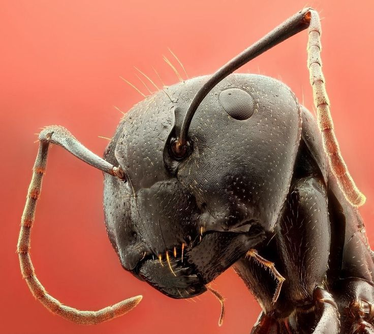 ant under a microscope - photo #2