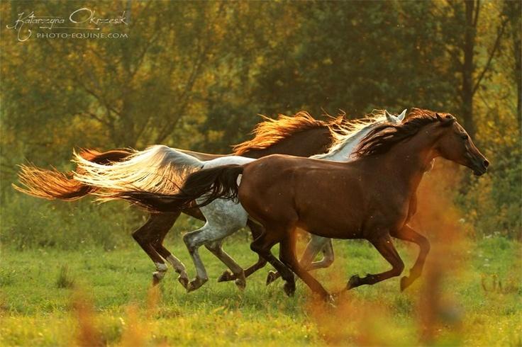 Wild Horse Running Fast WILD HORSES Quotes Lik...