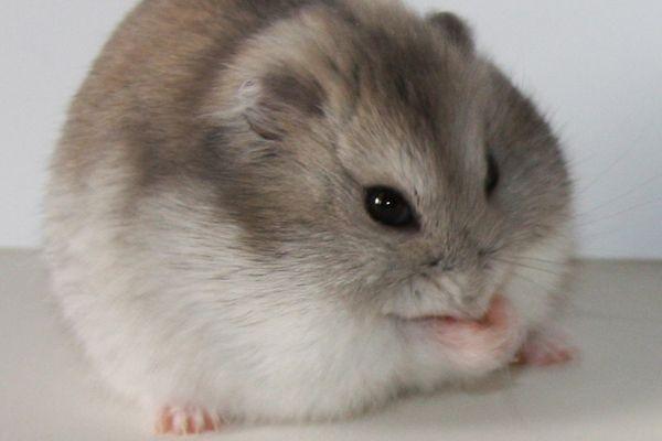 4 hamster porn