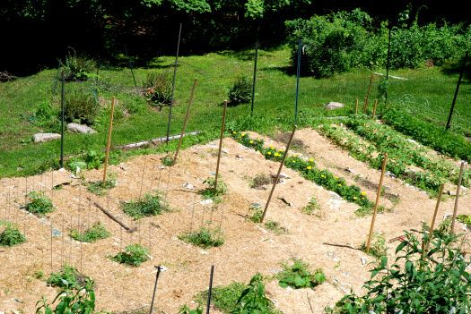 Mulching your vegetable garden keeping the weeds at bay for Grass killer for vegetable gardens