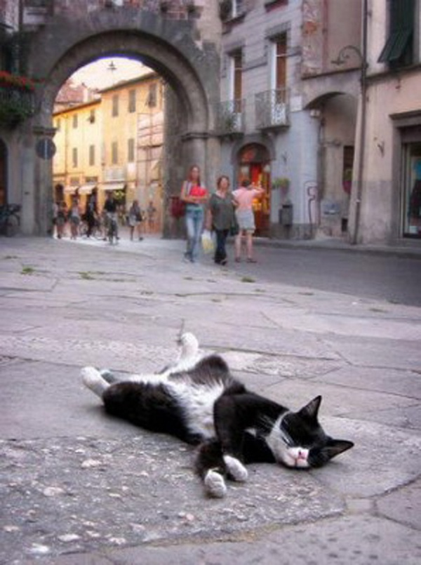 Kitty on the street #cat #kitten #feline #cute #animal
