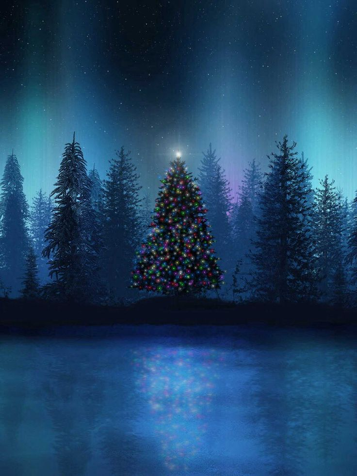Christmas tree alaska wildlife outdoors pinterest Outdoor christmas tree photos