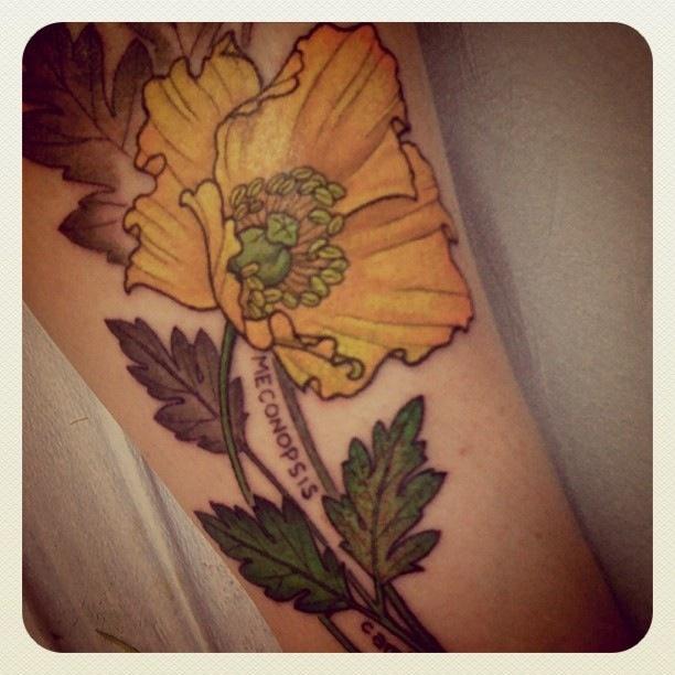 Yellow poppy. Love! | ...