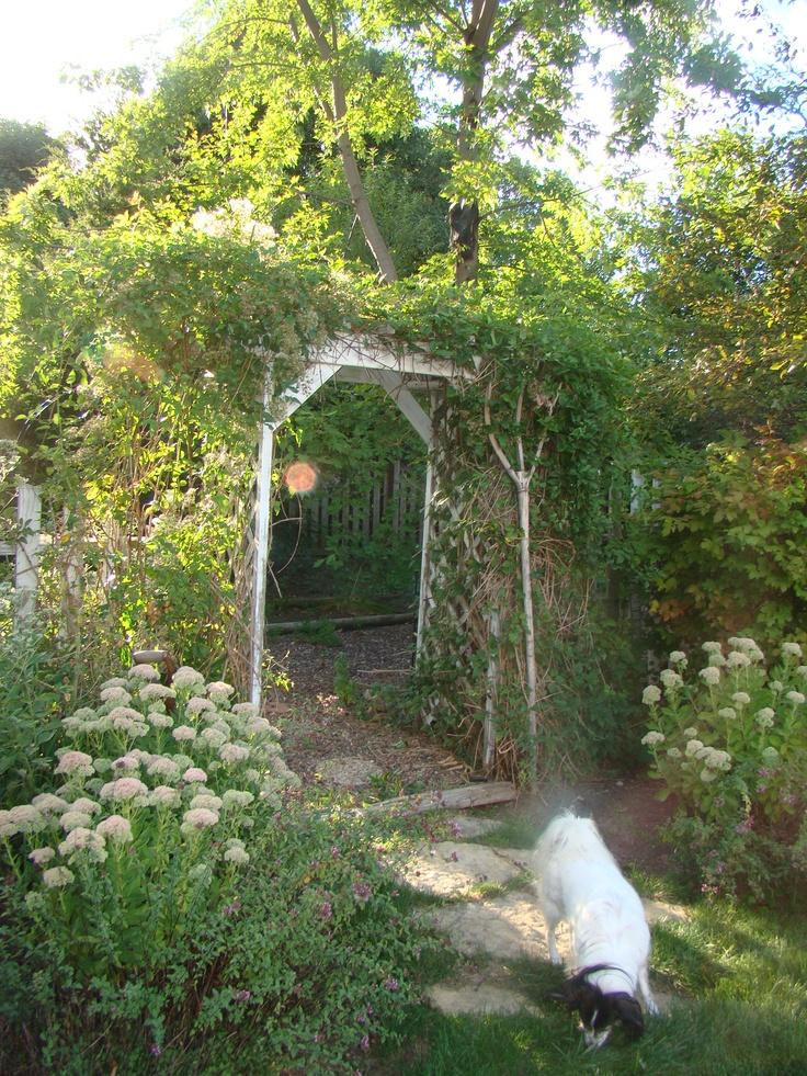 Secret garden secret garden ideas pinterest for Secret garden designs
