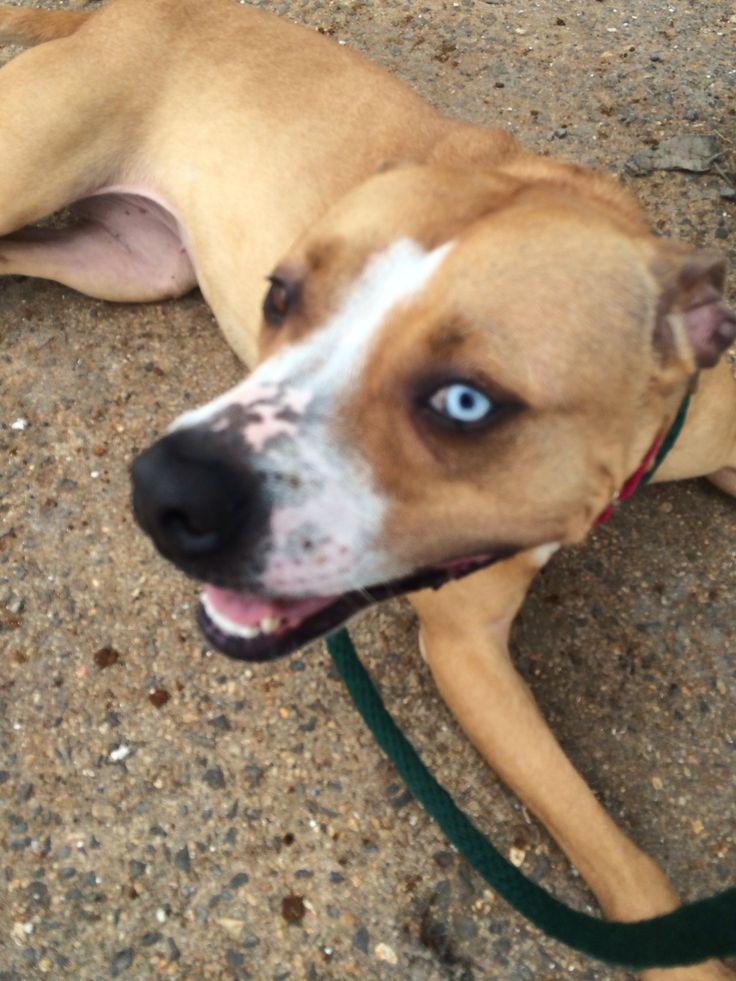 By carrie grubb on volunteering at villalobos rescue center in ne