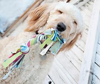 como hacer juguetes para perros