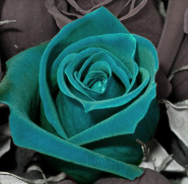 valentine blue color