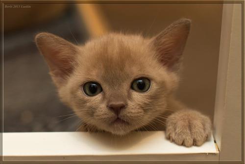 Tan Cute Cats