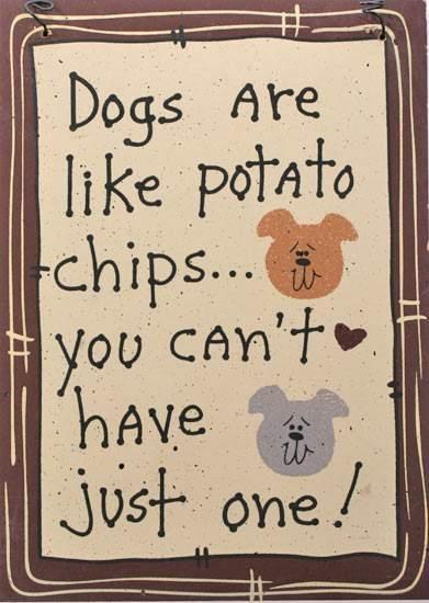 Τι είναι οι σκύλοι