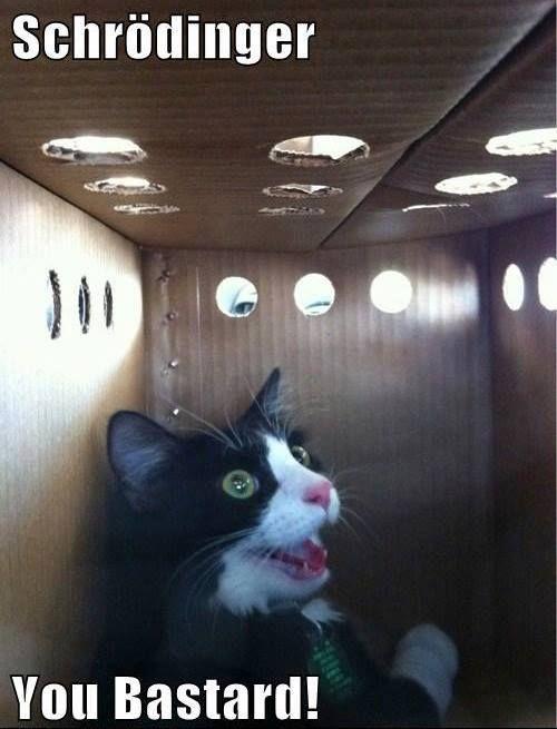 Schrodingers cat | Big Bang Theory | Pinterest
