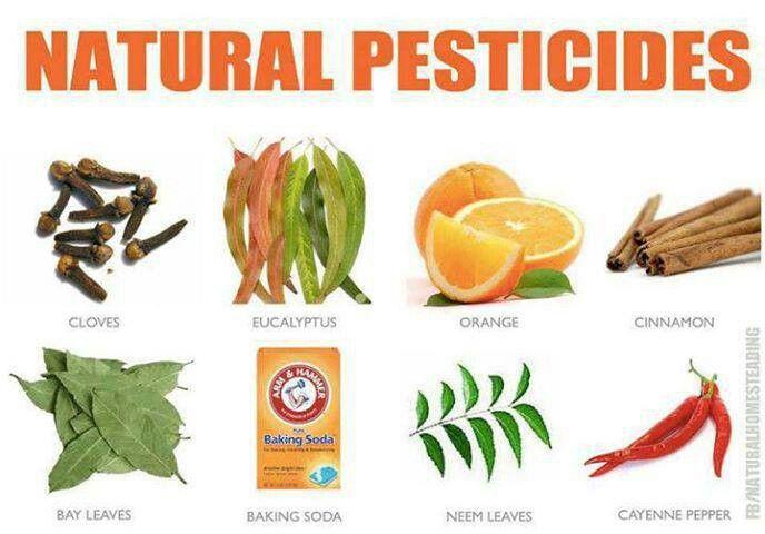 Natural Pesticides Garden Farm Pinterest