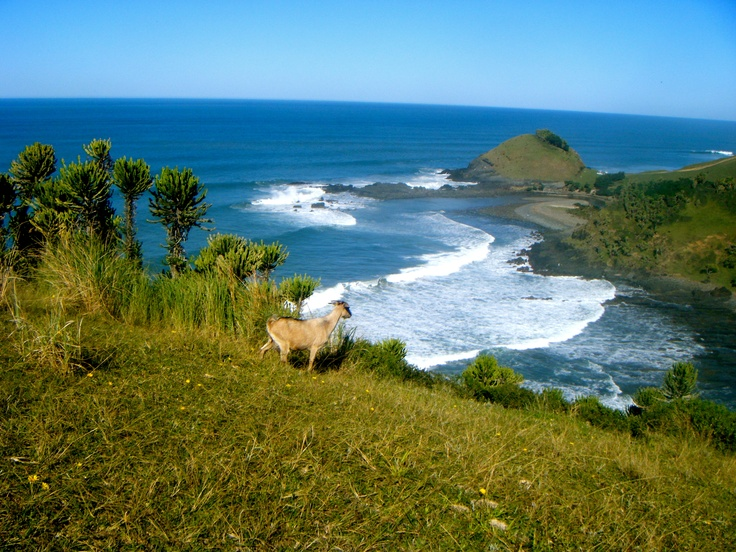 Coffee Bay South Africa  city images : Coffee Bay, South Africa | Oh The Places I Have Gone | Pinterest