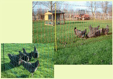 HIDDEN ELECTRIC DOG FENCE BATTERIES COLLARS WIRE AND PET