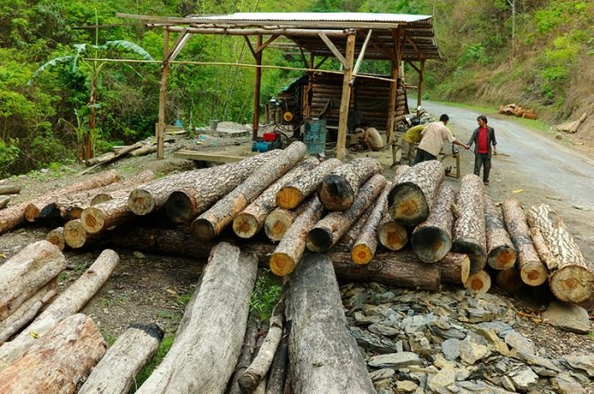conservation of forest essay for kids