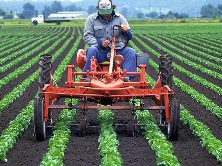Cultivating Tractors Pinterest