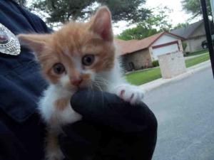 uber kittens san francisco