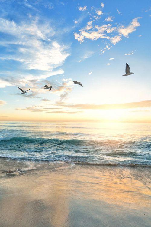 Birds at the beach.