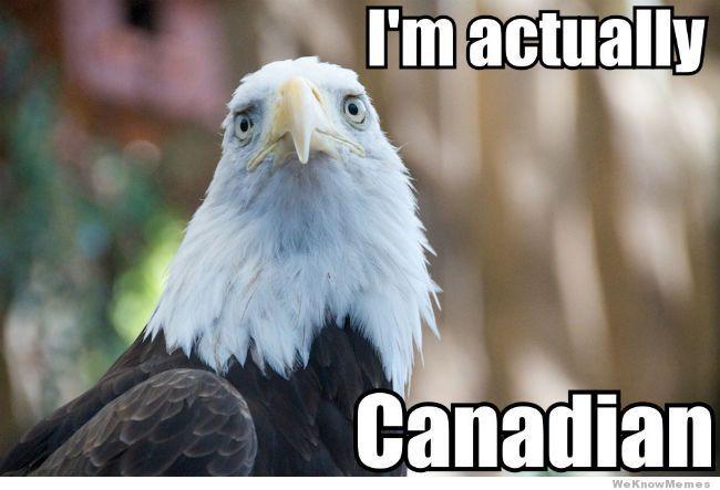 bald eagle vs canada goose meme