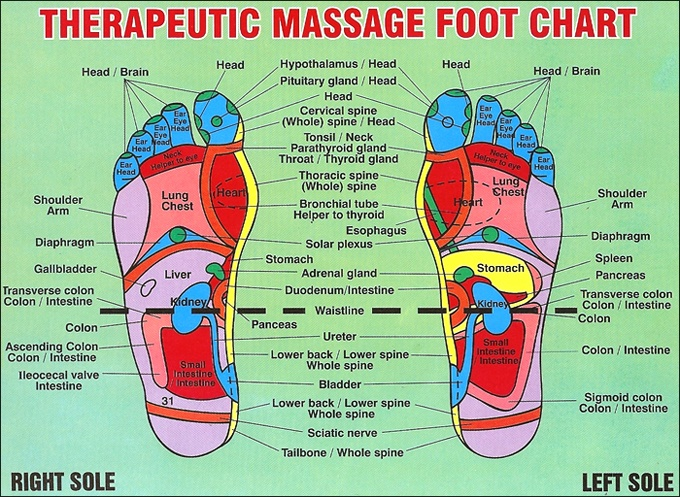 Zany image in printable reflexology foot chart