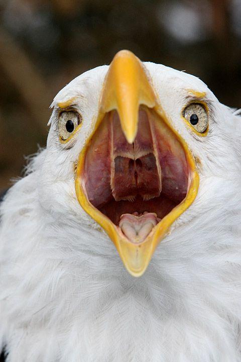 Birds mouth open