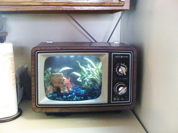 cute little table top version of the fish tank tv aquarium
