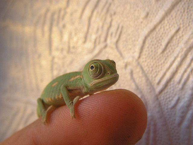 awww so tiny!