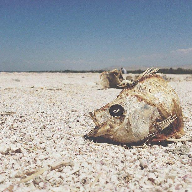 Salton sea 39 dead fish 39 road to rancho pinterest for Salton sea fishing