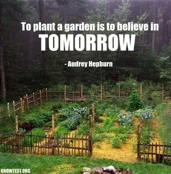 Plant a garden words of wisdom pinterest