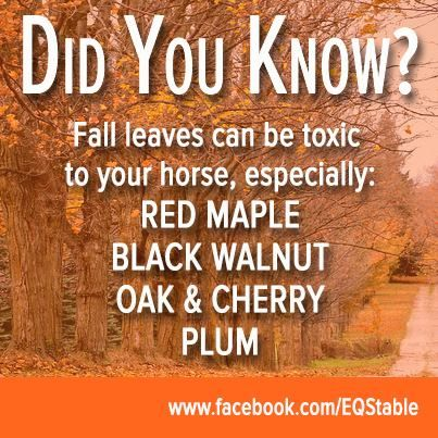 Toxic fall leaves