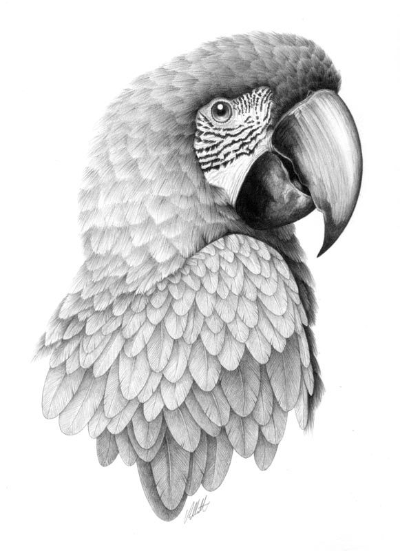 Go Back > Gallery For > Realistic Drawings Of Parrots Realistic Puppy ...