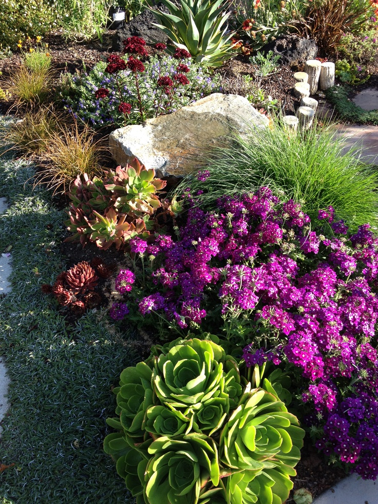 Mixed border, succulents and perennials combined