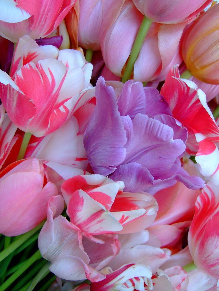tulips via Yarn Storm blog by author Jane Brocket.