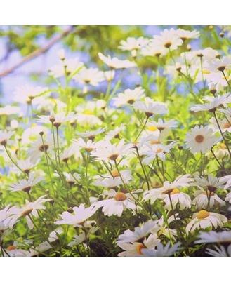 Daisy Meadow: Outdoor Art