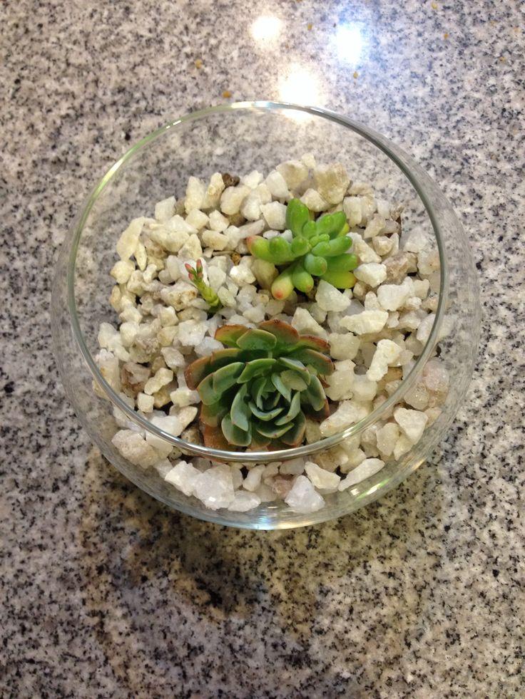 Cactus. Decoración. Planta | Mis manualidades | Pinterest