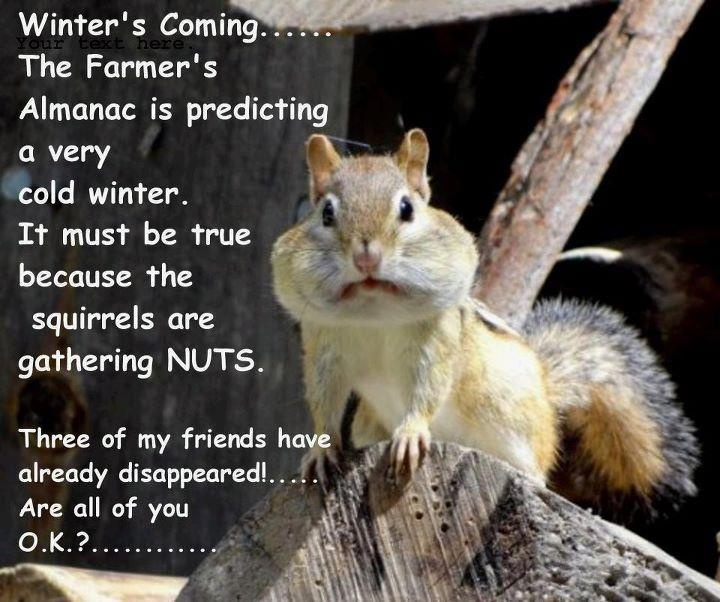Funny squirrel pictures nuts