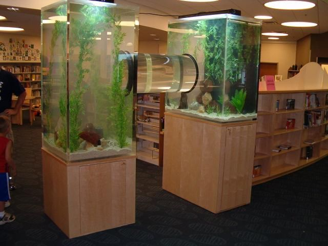 Two tanks and a tube fish tank fun pinterest for Tube fish tank