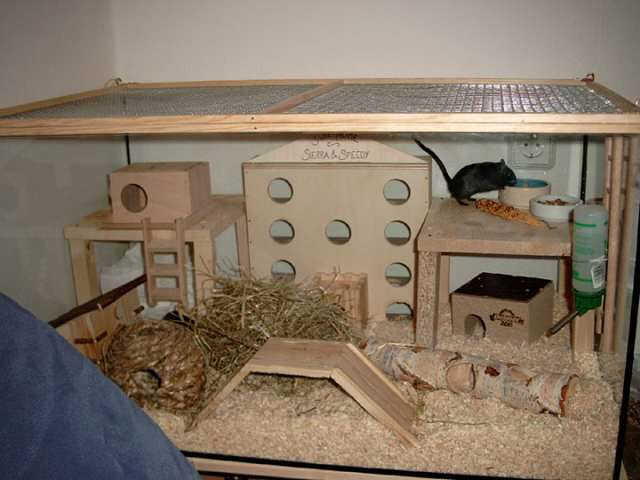 How to Split Cage a Gerbil How to Split Cage a Gerbil new picture