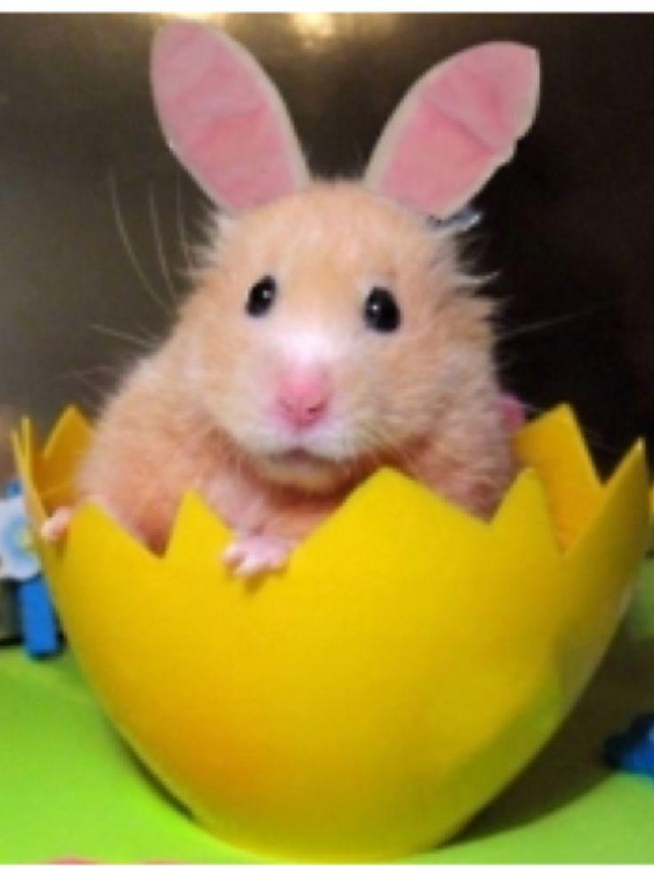 Fuzzy Teddy Bear Hamster | Remember - 44.2KB