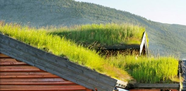 Green Roof Green Well Being Pinterest