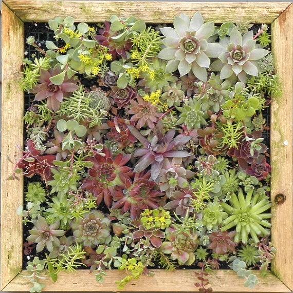 vertical succulent garden Design Pinterest